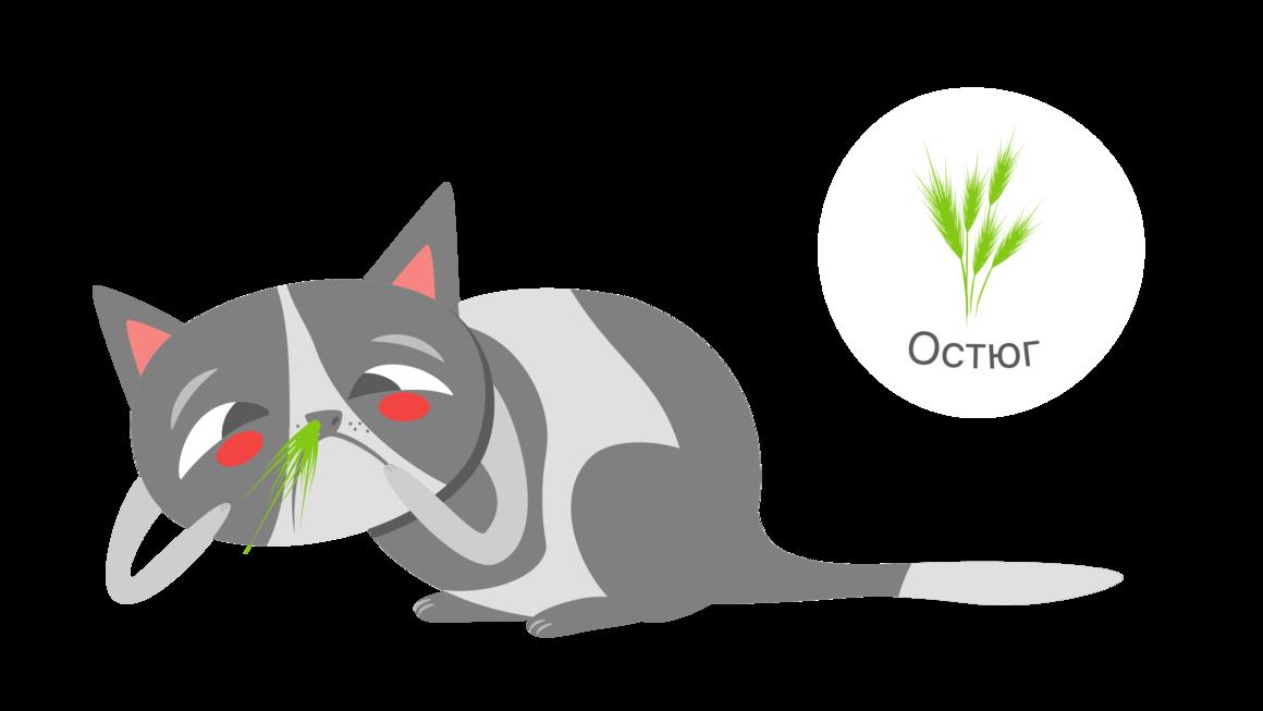 Остюг в носу у кошки