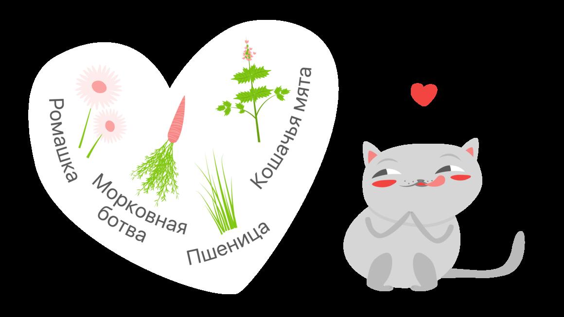 Полезные растения для кошек