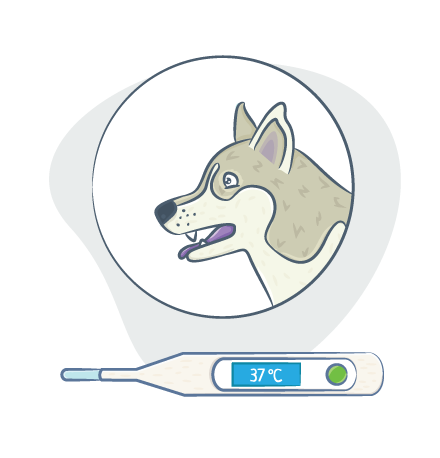 Переохлажение у собак: синюшность слизистых при гипотермии