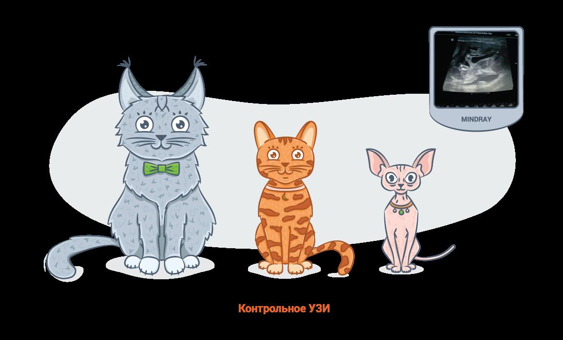 Как узнать сколько кошка беременна thumbnail