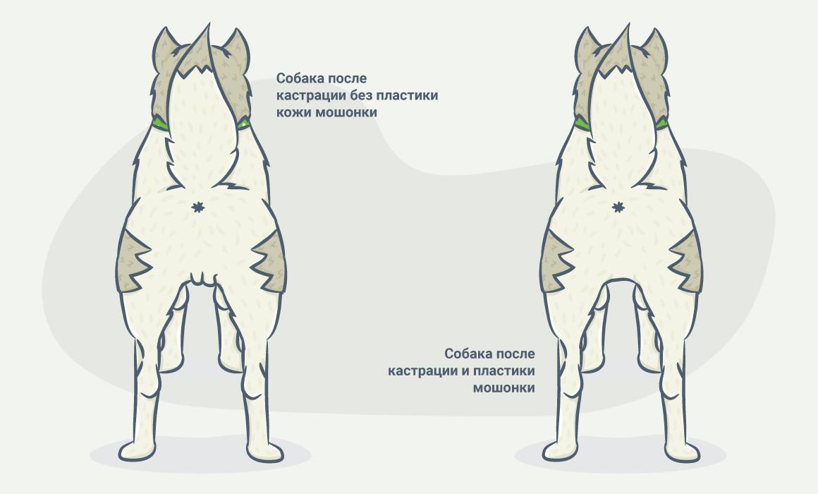 что такое кастрация у собак