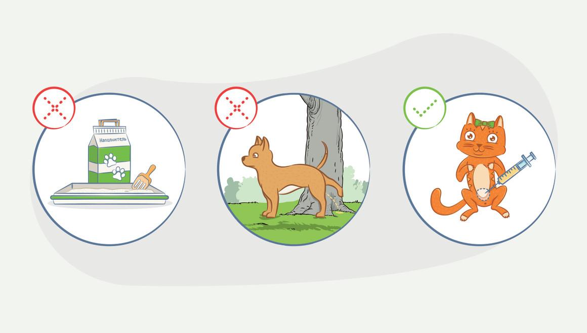 Как взять мочу у собаки или кота на анализ?