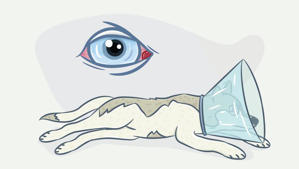 Почему у собак опухают глаза и как помочь питомцу