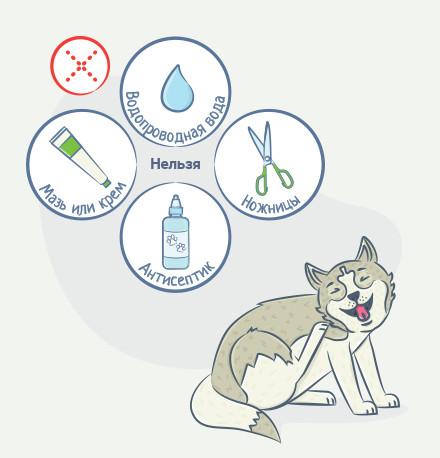 Подготовка кошек и собак к соскобам кожи